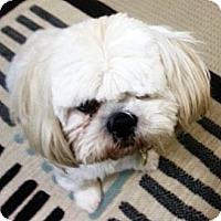 Adopt A Pet :: Lyng - Toronto, ON