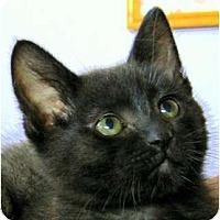 Adopt A Pet :: Smokey - Encinitas, CA