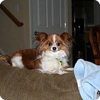 Adopt A Pet :: Maia - Commerce City, CO