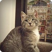 Adopt A Pet :: Spunky - Roseville, MN
