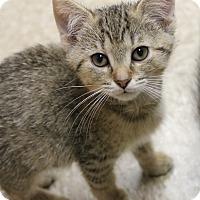 Adopt A Pet :: Julian - Medina, OH