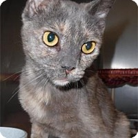 Domestic Shorthair Cat for adoption in Waupaca, Wisconsin - Legend