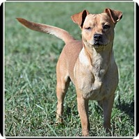 Adopt A Pet :: Scout - Indian Trail, NC