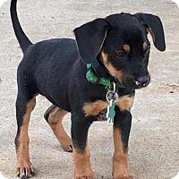 Adopt A Pet :: Hope - Alpharetta, GA