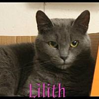 Adopt A Pet :: Lilith - Crandall, GA