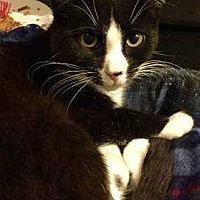 Adopt A Pet :: Dottie - New City, NY