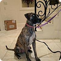 Adopt A Pet :: Francine - Spring, TX