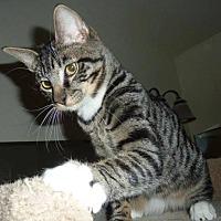 Adopt A Pet :: Randall - Phoenix, AZ