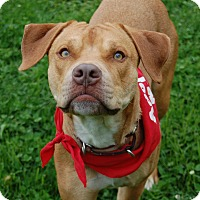 Adopt A Pet :: Bret - Wilmington, DE