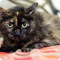 Adopt A Pet :: Trixie - Monroe, GA