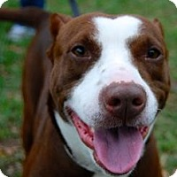 Adopt A Pet :: Hershey - Gainesville, FL