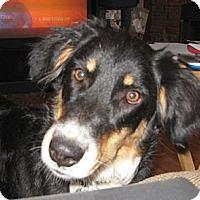 Adopt A Pet :: Kristy - Golden Valley, AZ