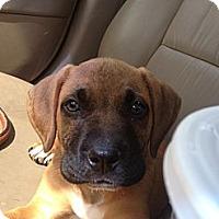 Adopt A Pet :: Marmaduke - Lancaster, OH
