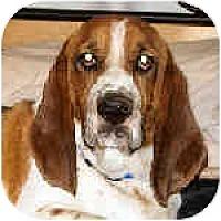 Adopt A Pet :: Kingston - Phoenix, AZ