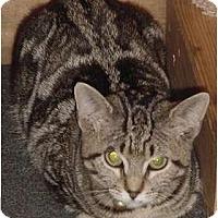 Adopt A Pet :: Ava - Franklin, NC