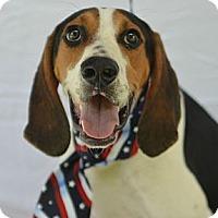 Adopt A Pet :: Woodrow - Plano, TX