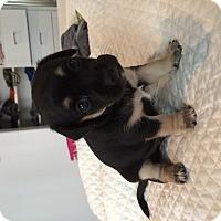 Adopt A Pet :: Lily - Los Angeles, CA