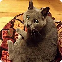 Adopt A Pet :: Chupa - St. Louis, MO