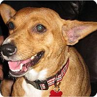 Adopt A Pet :: Lily - Salem, OR
