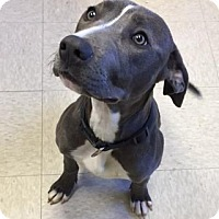 Adopt A Pet :: Kelsey - Greeley, CO