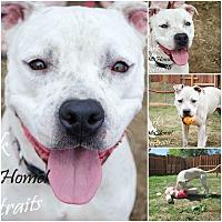 Adopt A Pet :: Sadie - Sylacauga, AL