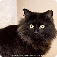 Adopt A Pet :: Rey - Fountain Hills, AZ