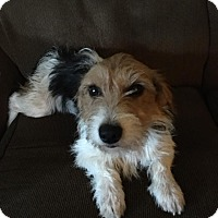 Adopt A Pet :: Cate - Lakeville, MN