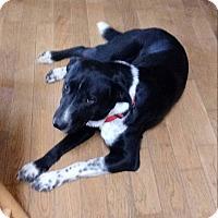 Adopt A Pet :: Yahoo - MC KENZIE, TN