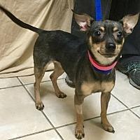 Adopt A Pet :: Skittles - Phoenix, AZ