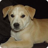 Adopt A Pet :: Irene - Phoenix, AZ