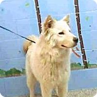 Adopt A Pet :: Topper - Los Angeles, CA