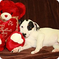 Adopt A Pet :: Jill - Washington, DC