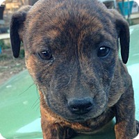 Adopt A Pet :: Kiera - Louisville, KY