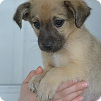 Adopt A Pet :: Kieran - Danbury, CT