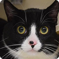 Adopt A Pet :: Oscar - Chicago, IL