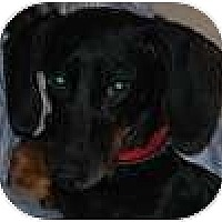 Adopt A Pet :: Bowie - Hamilton, ON