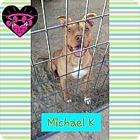 Adopt A Pet :: Michael K - Fowler, CA