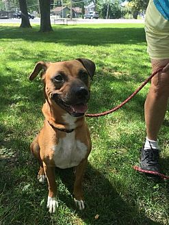 Pit Bull Terrier Mix Dog for adoption in Port Clinton, Ohio - Leah