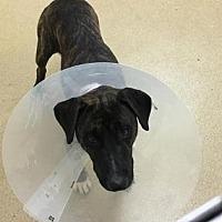 Adopt A Pet :: Duncan - Miami, FL