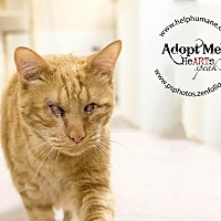 Adopt A Pet :: Jacques - Belton, MO
