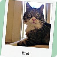 Adopt A Pet :: Brett - Tombstone, AZ