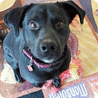 Adopt A Pet :: Remy - Huntsville, AL