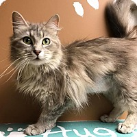 Adopt A Pet :: Filly - Maryville, MO
