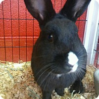 Adopt A Pet :: Schwartz - Elyria, OH