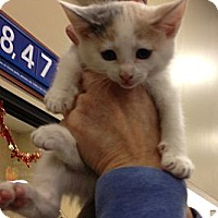 Adopt A Pet :: Sweet Pea - Pittstown, NJ
