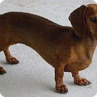 Adopt A Pet :: Brenda - San Jose, CA