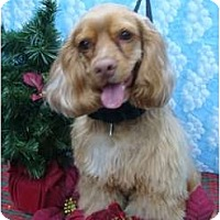 Adopt A Pet :: Tiffany - Sugarland, TX