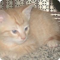 Adopt A Pet :: MARLEY - Acme, PA