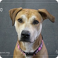 Adopt A Pet :: Pogo - Rockwall, TX