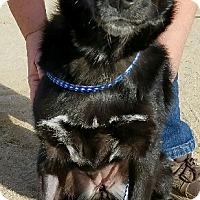 Adopt A Pet :: Natalia - Monrovia, CA